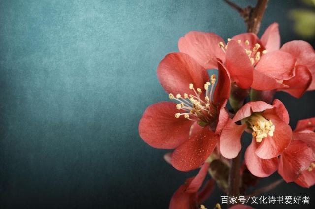 超级飞花令——颜色、花