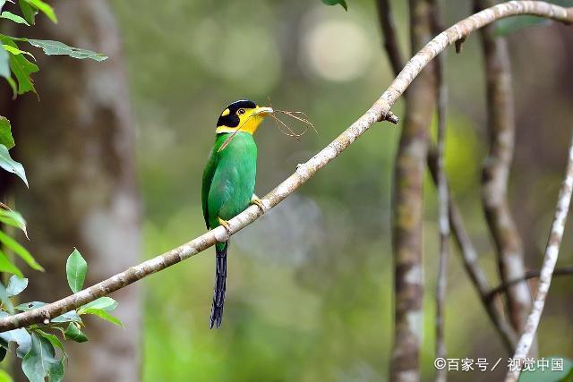 养过鸟的朋友知道鸟类的生活习性吗?快来了解一下吧!