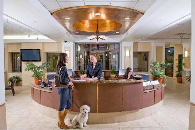 看看这些五星级宠物酒店,你们人类真住不起