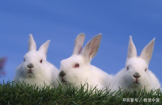 """生肖兔,""""横财""""由天而降!就在明日酉时!接了整年笑口常开! 第3张"""