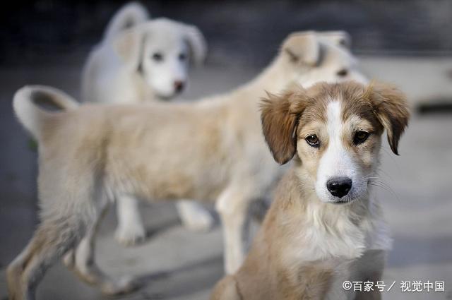 为人类做出巨大贡献的狗,你真的了解它们吗?(下)