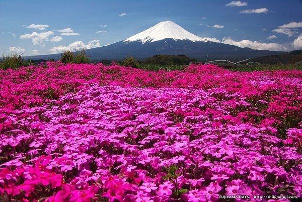 富士山旅遊攻略——Alico登山鞋