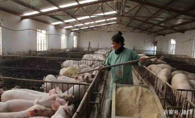 农村中小养猪场请注意,由于这个因素,接下来你们将经历困难!