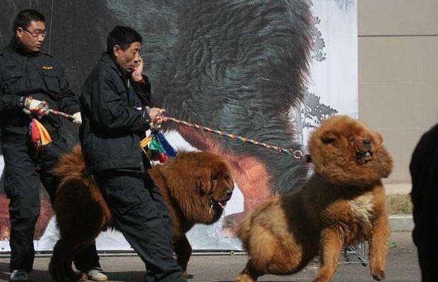 如果你经常对狗狗做这5件事,它只会越来越恨你,别犯错了!