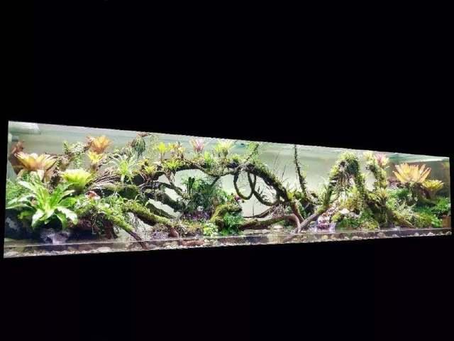 比植物墙漂亮百倍的雨林缸造景_国际比赛前十名作品欣赏