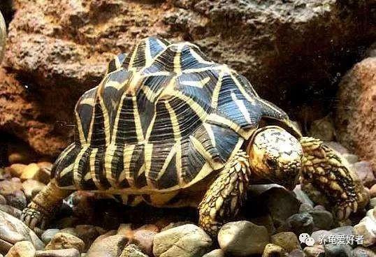 我们养龟的几种模式,你适合哪种呢?