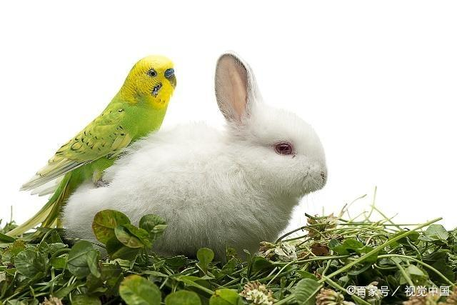"""生肖兔,""""横财""""由天而降!就在明日酉时!接了整年笑口常开! 第2张"""