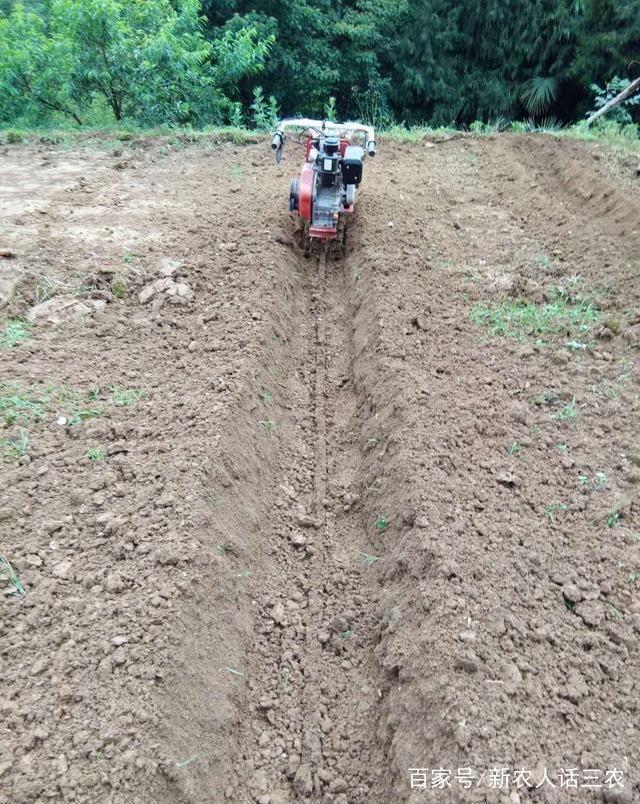 姜葱培土、土豆培土、果园施肥都用它,开沟培土机走向寻常百姓家