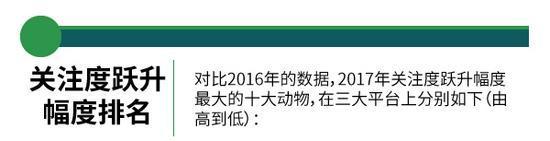 2017国家重点保护动物关注度排名榜排行不一:大熊猫天鹅上榜