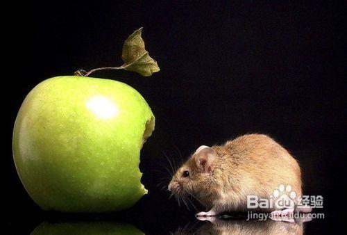 柳州杀老鼠