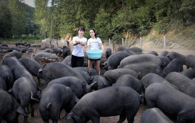美女姐妹深山养猪常被表白:想追我先扛动半头猪
