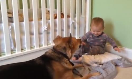 成精了!狗狗与小宝宝合作偷零食,被铲屎官发现后立即放弃队友