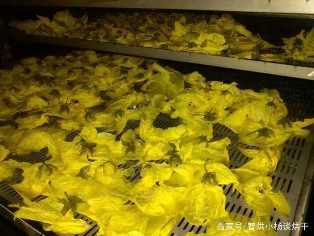 认识鲜花中C位出道的金花葵干燥设备