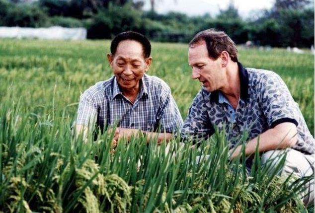 华为与袁隆平合作的海水稻是什么 海水稻研发成功有什么用