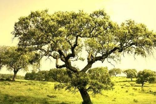 <b>心理测试:下图树哪个最大?测测你晚年靠什么养老</b>