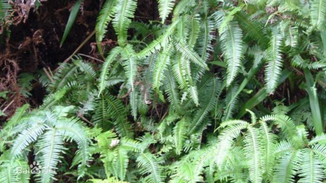 广西特产植物图片