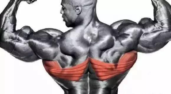 背部训练:背部肌肉组成及最佳训练项目详解-轻博客