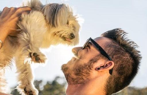 关于狗狗的这6点常识,如果你不知道,就真的白养了!
