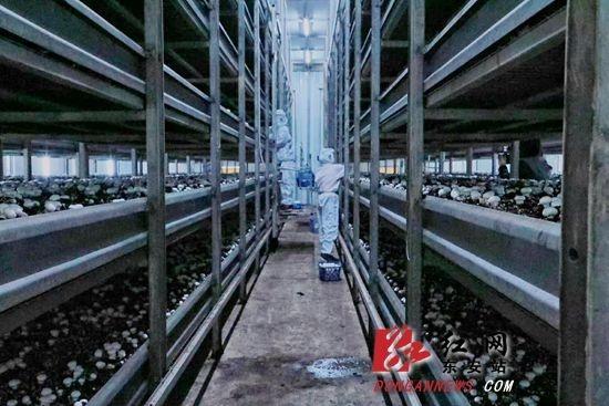 """东安农业产业化经营驶入""""快车道"""""""