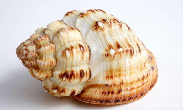 海螺的美味吃法你知道是什么嗎?我就只有吃過一次