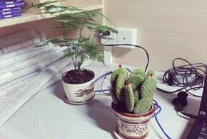 家中养这种植物竟会霉运连连