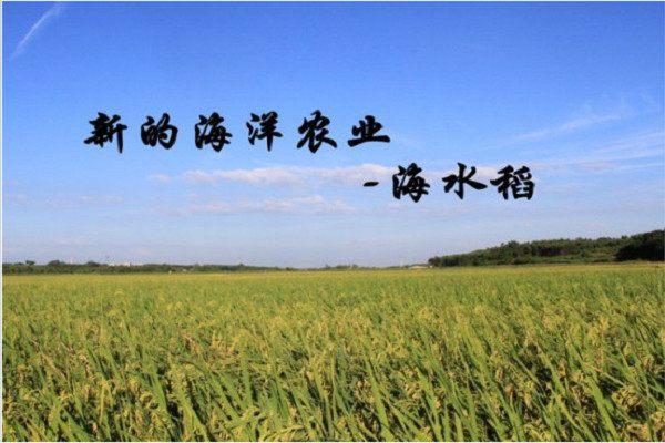 海水稻的优点是什么 海水稻成功对国家有什么意义