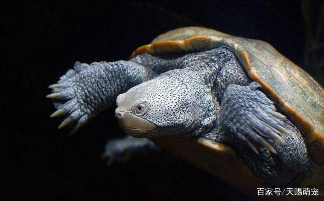 百年王八万年鳖,你确定自己能养好乌龟吗?养龟这几点一定要注意