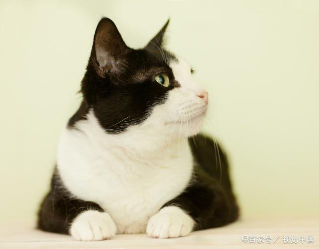 爱猫却不敢养猫的3个原因,最后一个原因让很多猫奴放弃养猫!