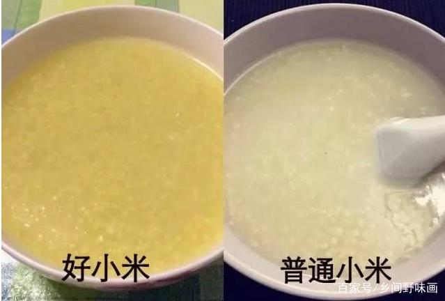 好吃的小米如何判断?哪里的小米好吃?