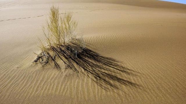 沙漠的沙子那么多,為什么我們不利用它做混凝土建材呢?漲知識了|新聞動態-寧夏東方盛達管業有限公司