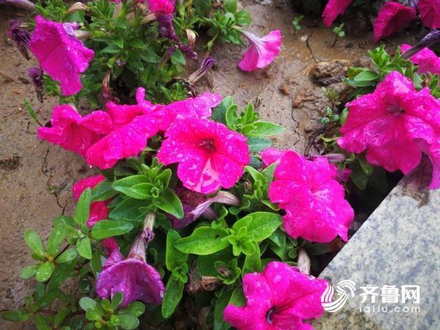 """降雨+停水! 23日威海开启""""水循环""""模式"""