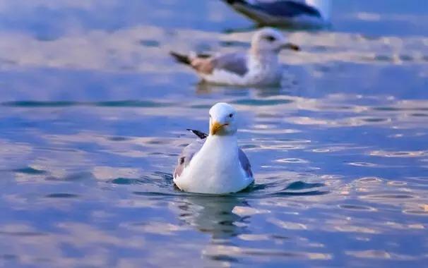 贝加尔湖只能冬天去?那是你没见过她金黄的模样!