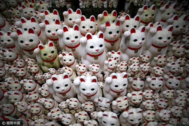日本寺庙被白色招财猫占领 集体挥手萌翻了
