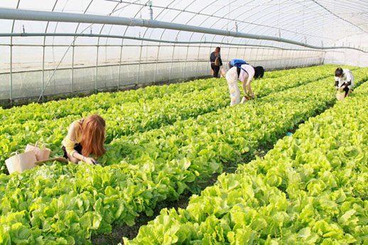 公園 都市 農業