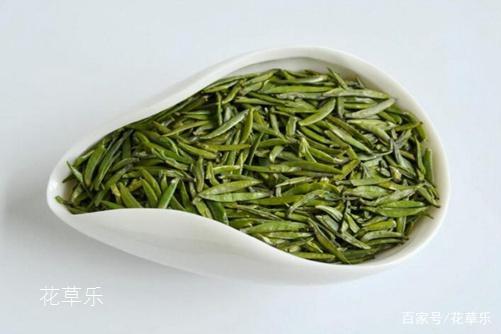 仙人掌茶是仙人掌泡的茶吗?仙人掌茶的功效与作用介绍