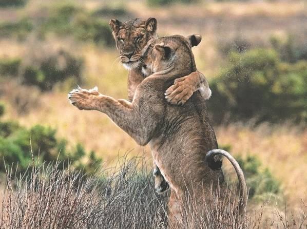 疆飞-每个动物的心里都住了个舞者