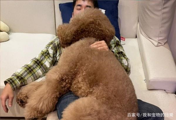 奴才抱巨狗抱枕睡覺!此照一出吸引許多網友暴動搶購買!