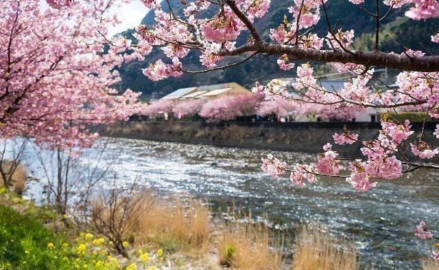 """日本东京的""""富人区"""":高端人士的居住地,一些女孩颜值媲美明星"""