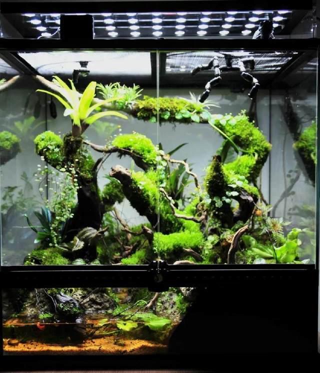 比植物墙漂亮百倍的雨林缸造景 国际比赛前十名作品欣赏