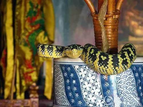 世界上最恐怖的寺庙,是寺庙还是蛇窝(www.jiachengjiye.com)