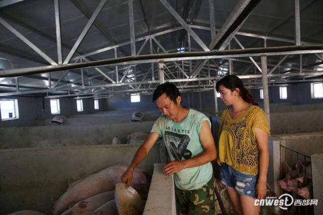 养猪人的感动瞬间|夫妻贩猪10年投60万山里养猪